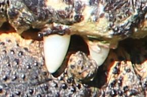 Canon 60D Image Sample