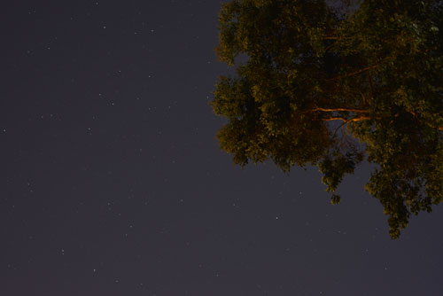 photo at night with tree