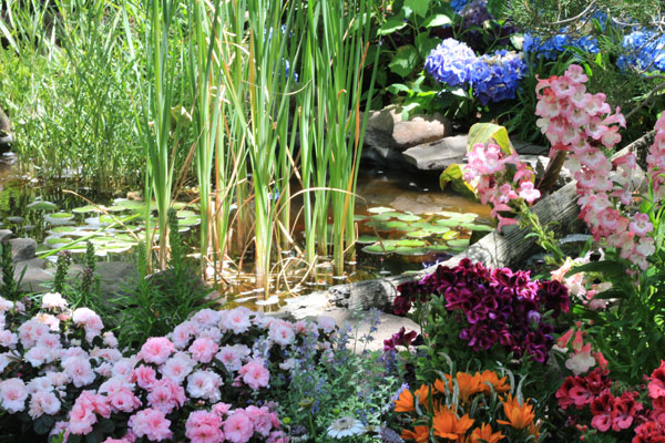 Canon 650D T4i - Garden With Flowers