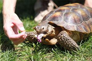 Turtle Eating Flower