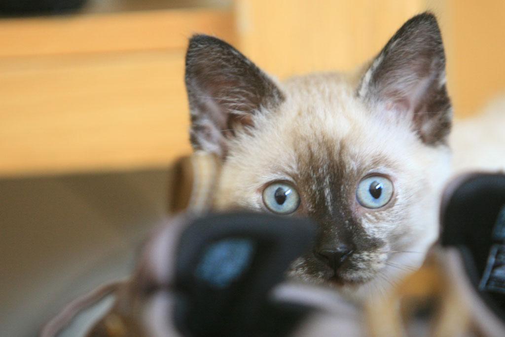Kitten Peeking Over Shoes