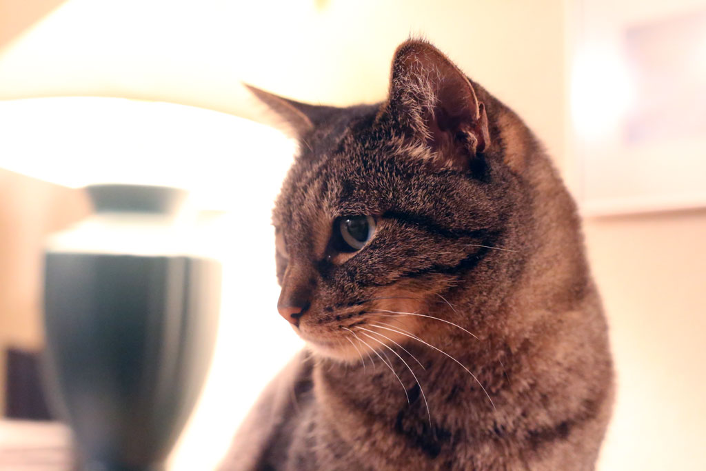 Canon 6D Cat Indoors