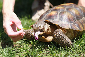 Turtle Eating Flower