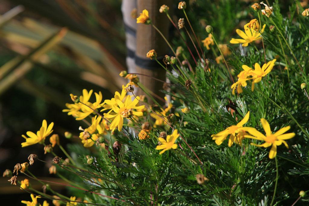 Yellow Flowers Captured in Program Mode